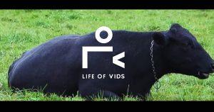 Life of Vids
